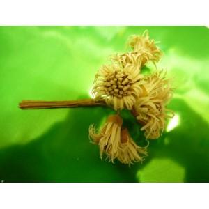 Fleur edelweiss